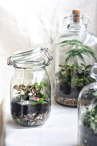 Make Your Own Terrarium With Jar And Fern Brockwell Park Community