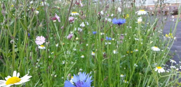 meadowsmall