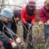 Fruit Bush Pruning lessons sm