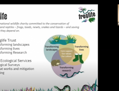 Froglife – an online talk by Emily Millhouse